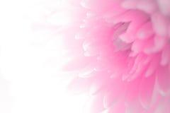 Weiche Schatten des Blumenblattes der süßen süßen Art ausstellungsraum stockfotos