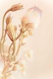 Weiche Tulpe mit der Blumeknospe Stockfotos