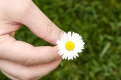 Weiche weiße Frühlingsblume in den Händen der Männer auf einem Hintergrund des grünen Grases Stockfotografie