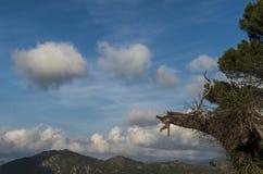 Weiche Wolken Lizenzfreies Stockfoto