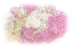 Weicher Blumenhintergrund mit Rosen und Alchemilla Stockbild