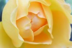 Weicher Hintergrund mit gelber wilder rosafarbener Blume Stockfotos