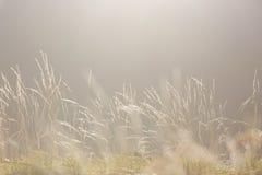 Weicher Morgen-Leuchtenaturhintergrund Lizenzfreies Stockbild