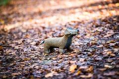Weicher Spielzeughund wird in Herbstwald gelegt Stockfotografie
