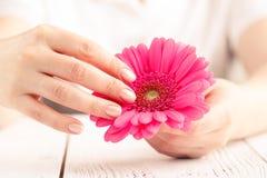 Weicher zarter Schutz für kritische Tage der Frau, gynäkologischer Menstruationszyklus, rosa Gerbera in der Hand lizenzfreie stockbilder