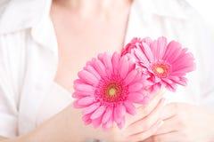 Weicher zarter Schutz für kritische Tage der Frau, gynäkologischer Menstruationszyklus, rosa Gerbera in der Hand lizenzfreie stockfotografie
