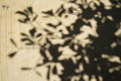 Weiches abstraktes natürliches Muster des großen Baumschattens auf hellbrauner Sandoberflächenstraße des Tempelbodens mit heller  Lizenzfreie Stockfotografie