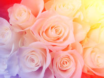 Weiches buntes Rosenblume bokeh Stockfotografie