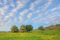 Weiches grünes Gras Stockfotografie