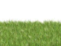 Weiches Gras lizenzfreie stockfotos