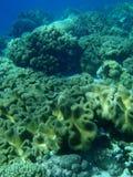 Weiches korallenrotes Feld Stockbild