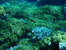 Weiches korallenrotes Feld Stockfotos