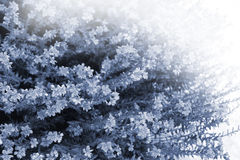Weiches Licht über Wildflowers Lizenzfreie Stockfotografie