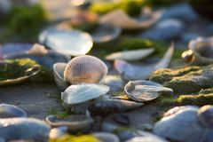 Weiches Licht auf der Seeküste dringt Oberteile ein lizenzfreie stockfotos