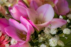 Weiches Rosa blüht Hintergrund stockfotos