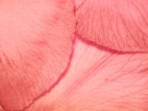 Weiches rosafarbenes Blumen-Blumenblatt-Foto Stockfotografie