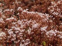 Weiches Sommerrosa blüht Hintergrund lizenzfreie stockfotos