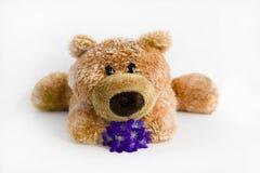 Weiches Spielzeug der Bär Stockbild