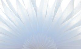 Weiches weißes Blumengewebe mit weicher Hintergrundbeleuchtung stockfoto