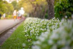 Weichzeichnungs-Wiese des Lavendels Naturzusammensetzung auf Sonnenschein DA Stockbild