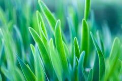 Weichzeichnungsmakrofoto des grünen Grases Stockfotos