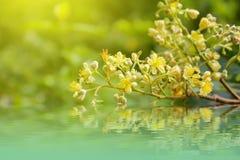Weichzeichnungsnahaufnahme von gelben Blumen Lizenzfreies Stockfoto
