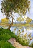 Weide über dem Fluss Stockbild