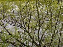 Weide über Wasserfrühlingshintergrund lizenzfreies stockfoto
