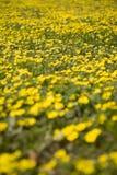 Weide 2 van de lente Stock Foto's