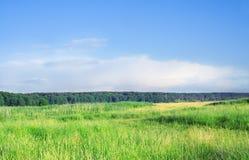 Weide. Stock Foto's