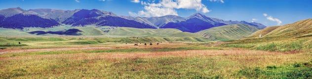 Weide auf dem Zusbergplateau Region Kasachstans, Almaty stockbild