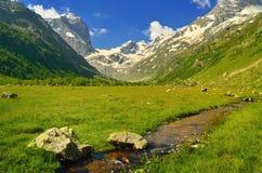 Weide in bergen Stock Foto