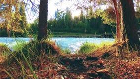 Weide bij de bank van de bergrivier Landschap met groen gras, pijnboombomen en zonstralen De beweging op gemotoriseerde schuif do stock videobeelden