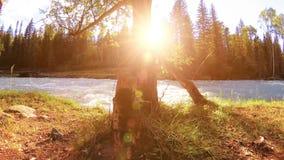 Weide bij de bank van de bergrivier Landschap met groen gras, pijnboombomen en zonstralen De beweging op gemotoriseerde schuif do stock video