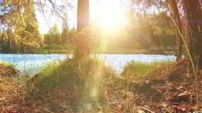 Weide bij de bank van de bergrivier Landschap met groen gras, pijnboombomen en zonstralen De beweging op gemotoriseerde schuif do stock footage