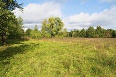 Weide, bomen en hemel in een verrukkelijk licht Stock Foto