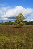 Weide, bomen en hemel in een verrukkelijk licht _6 Royalty-vrije Stock Foto's