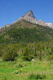 Weide, bos en berg stock afbeelding