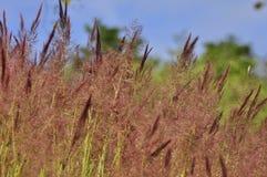 Weide in Brasilien Stockbild