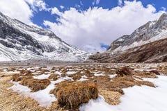Weide bruin op de sneeuwberg met wolken en blauwe hemel Royalty-vrije Stock Foto
