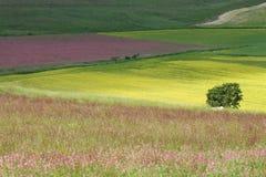 Weide in centraal Itali? stock foto's