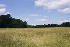 Weide in Charles River Peninsula Park, Needham, doctorandus in de letteren royalty-vrije stock foto's