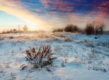 Weide in de winterochtend Royalty-vrije Stock Foto's
