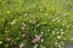 Weide in de zomer in Noorwegen Stock Foto