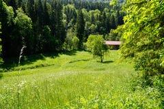 Weide in de zomer van zwart bos royalty-vrije stock foto's