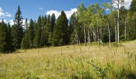 Weide, Donkere Bos en Heldere Blauwe Hemel Stock Foto's