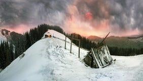 Weide in einem Blizzard Lizenzfreie Stockfotos