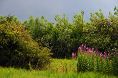Weide en bomen Royalty-vrije Stock Afbeelding