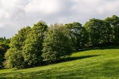 Weide en bomen royalty-vrije stock afbeeldingen