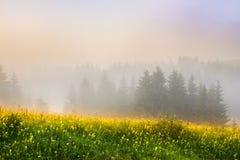 Weide en bomen in de mist Stock Fotografie